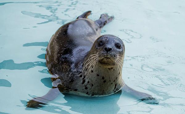 Seal Sanctuary | Penmenner B&B | Lizard Accommodation